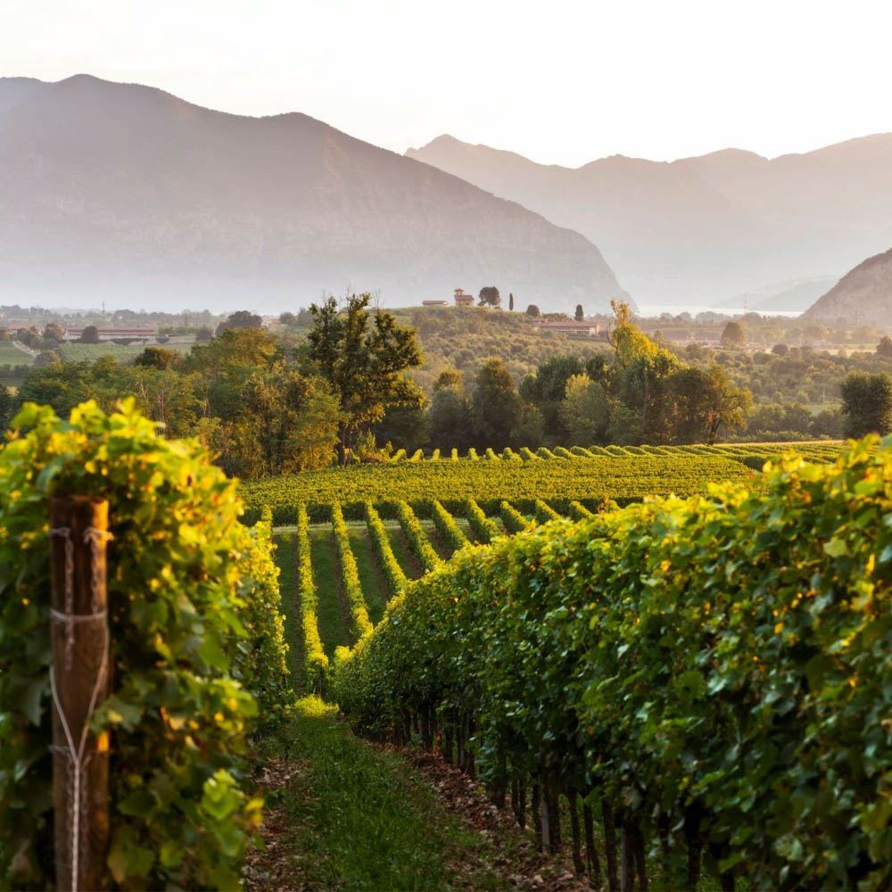Tours - Tasting tour in the Franciacorta Valley (photo 1)