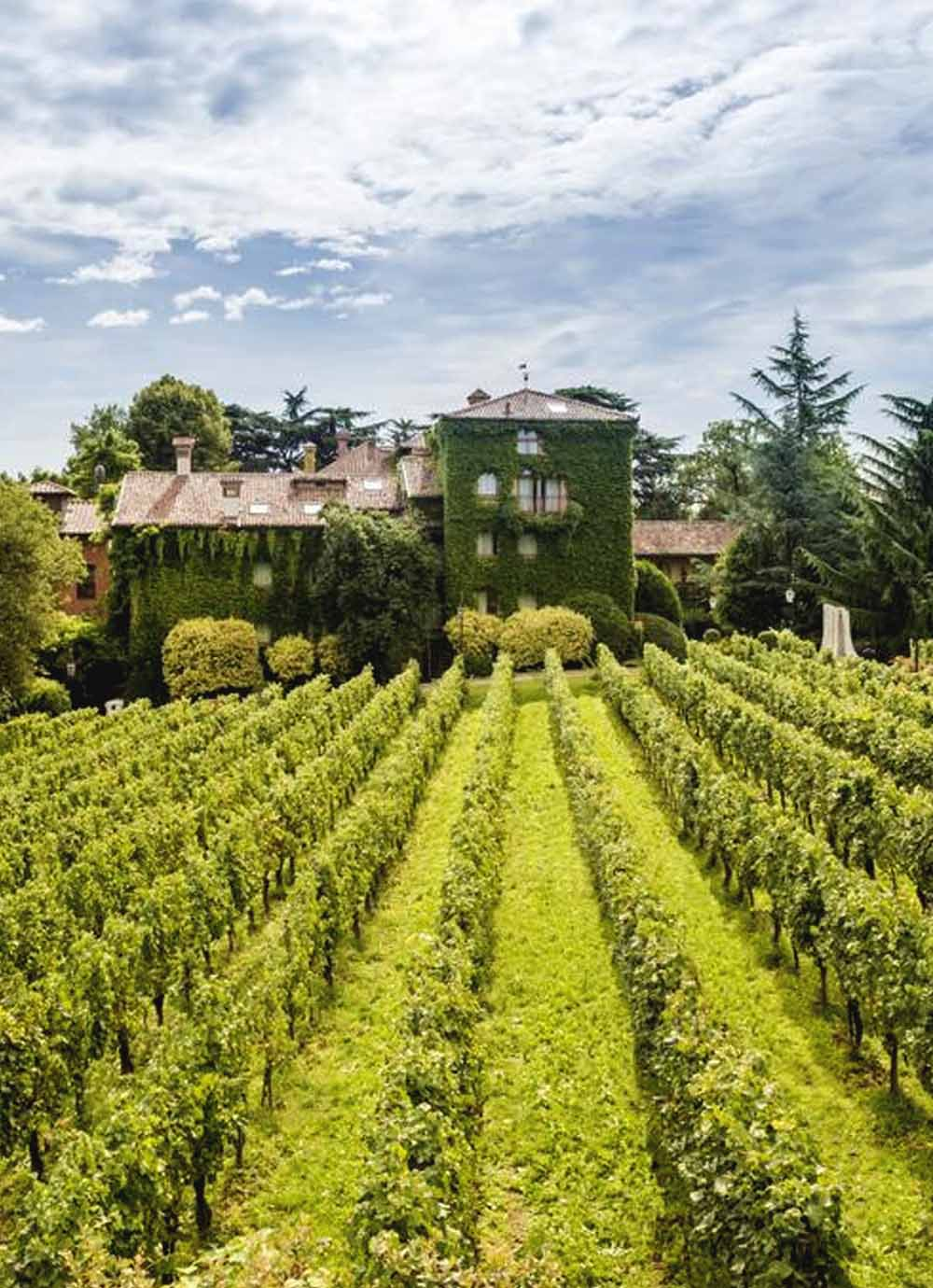 Tours - Tasting tour in the Franciacorta Valley (photo 2)
