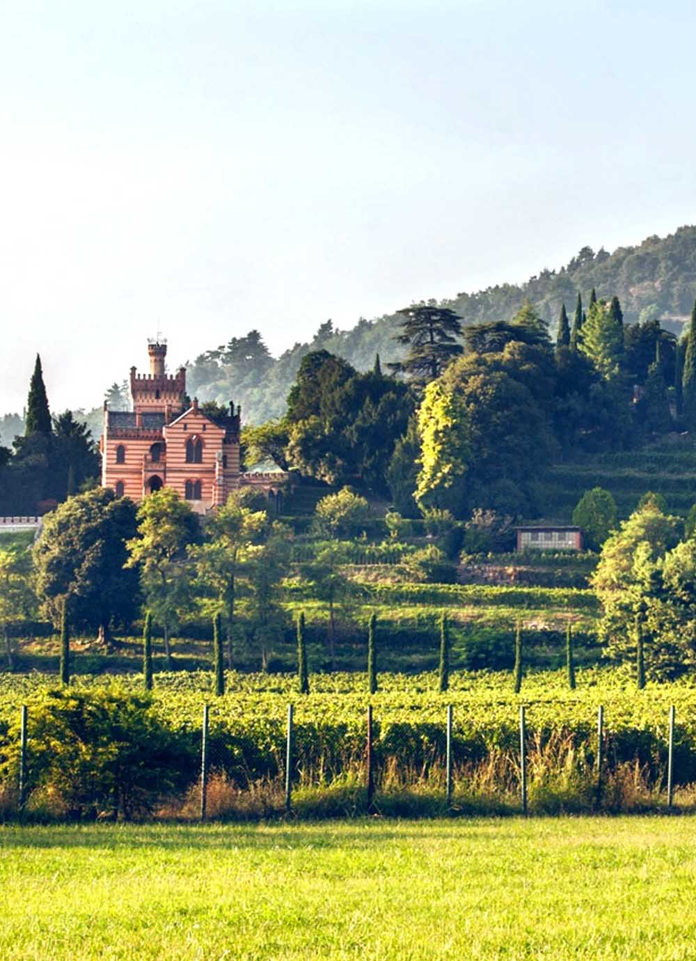 Tours - Tasting tour in the Franciacorta Valley (photo 5)