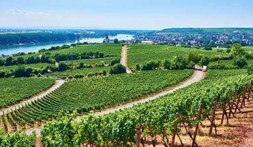 The wine of Lake Garda